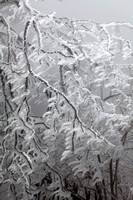 "Huang Shan-""Iced Pine Branches"""